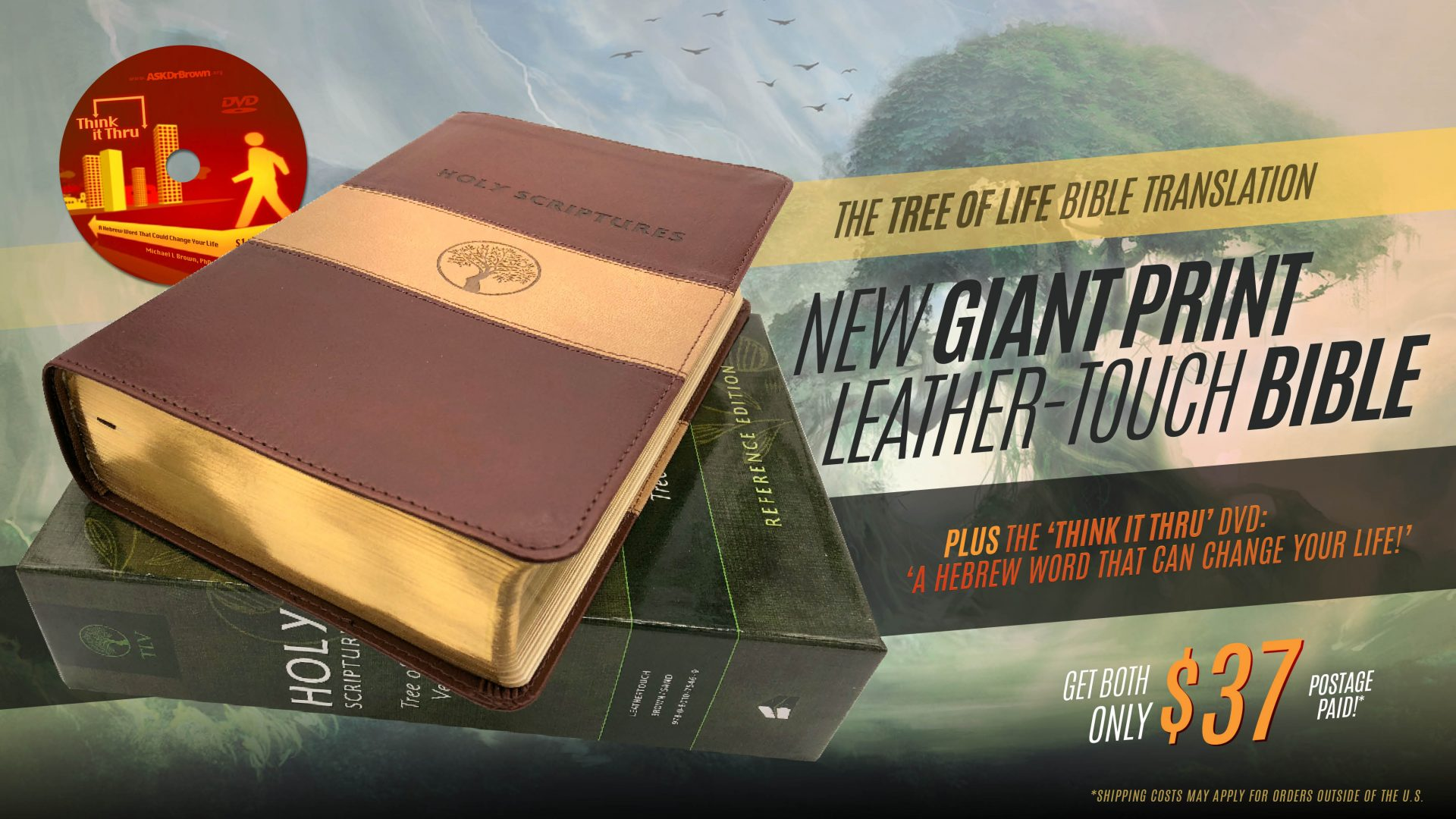 *Special!* Giant Print TLV Bible + free DVD
